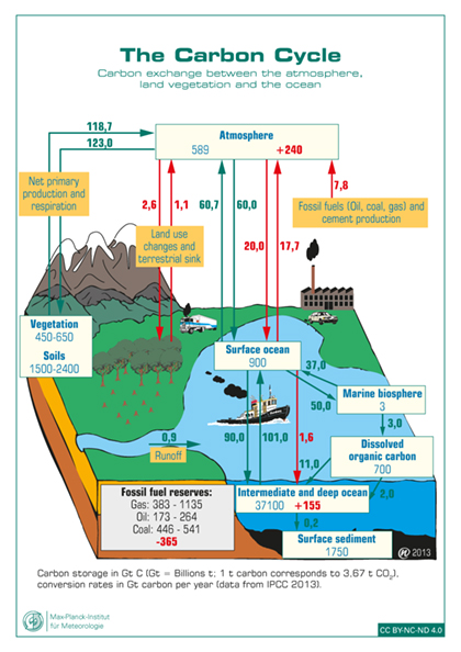Graphic Carbon Cycle